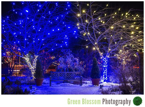 Denver Botanic Gardens Blossoms Of Light 2014
