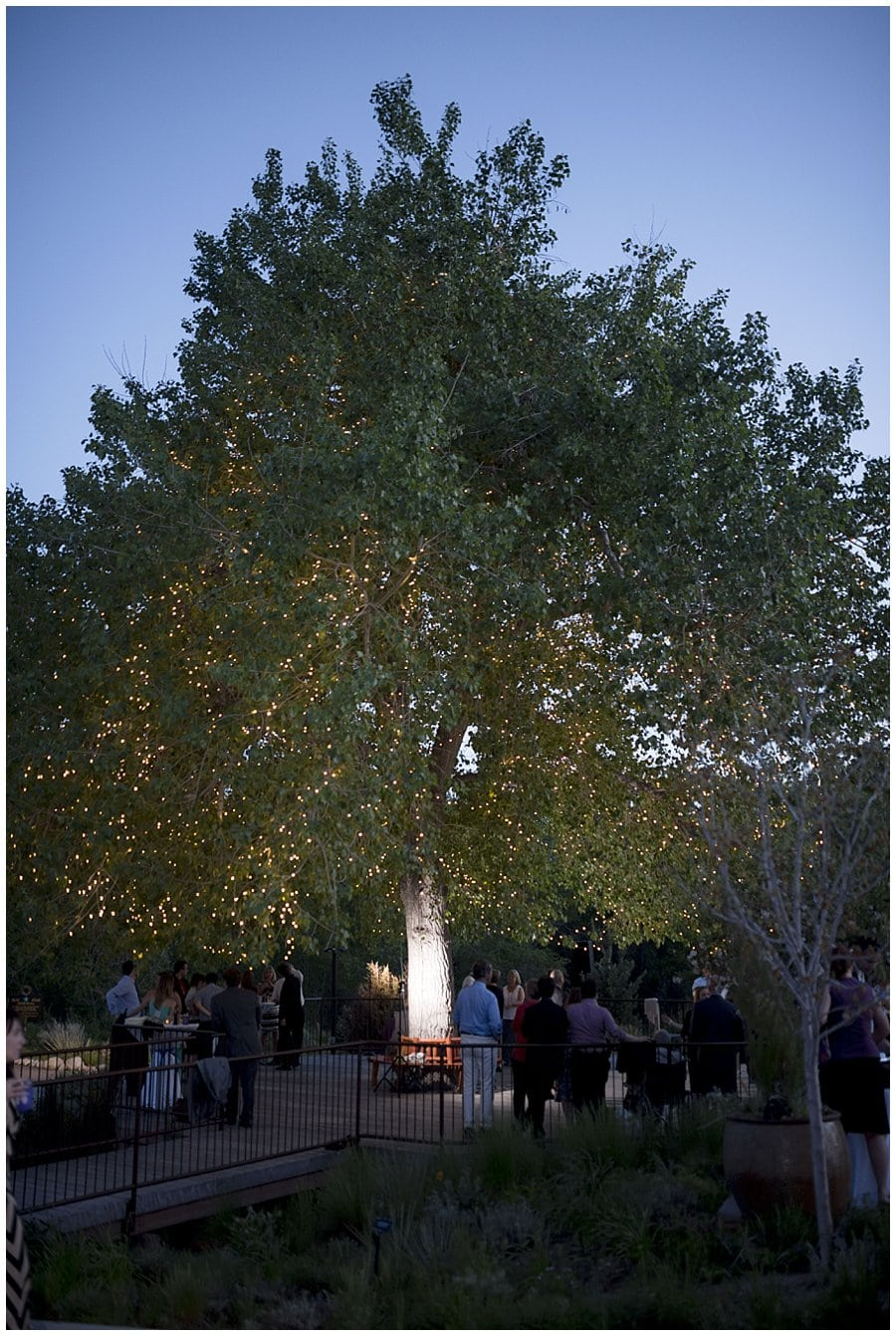 Denver Botanic Gardens at Chatfield Prairie Canopy Reception Photo 2
