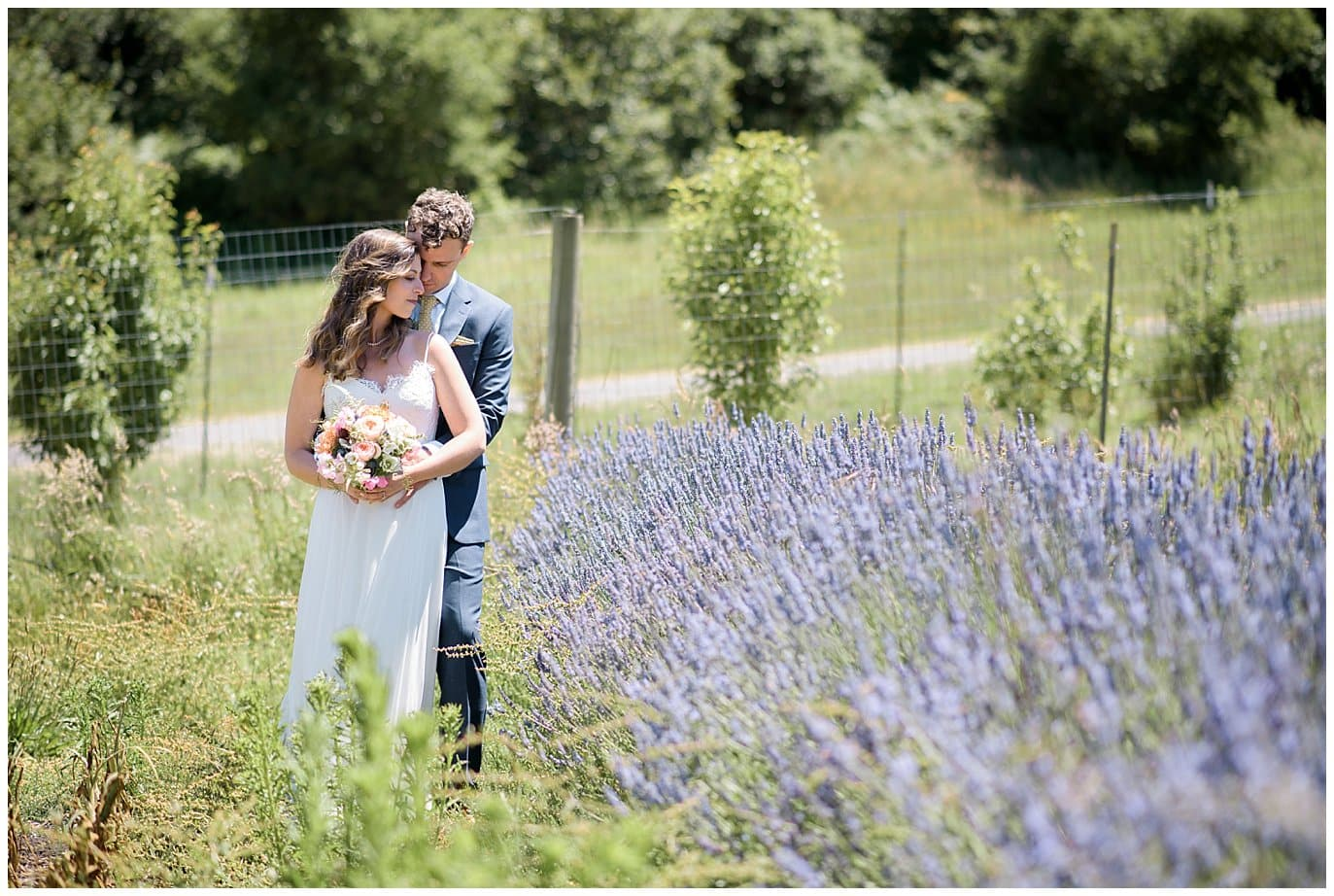 bride and groom cuddle in lavender garden at Mann Family Farm wedding by northern California wedding photographer Jennie Crate