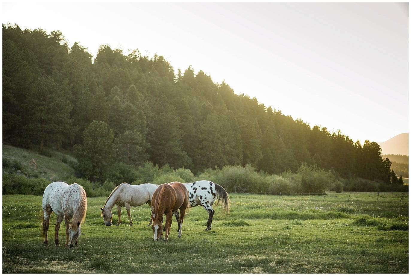 horses grazing in field at Deer Creek Valley Ranch wedding by Colorado Wedding Photographer Jennie Crate Photographer