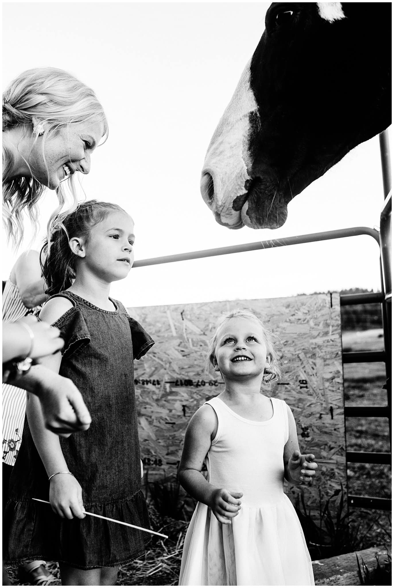 Wedding party feeding a horse at Deer Creek Valley Ranch wedding by Colorado Wedding Photographer Jennie Crate Photographer