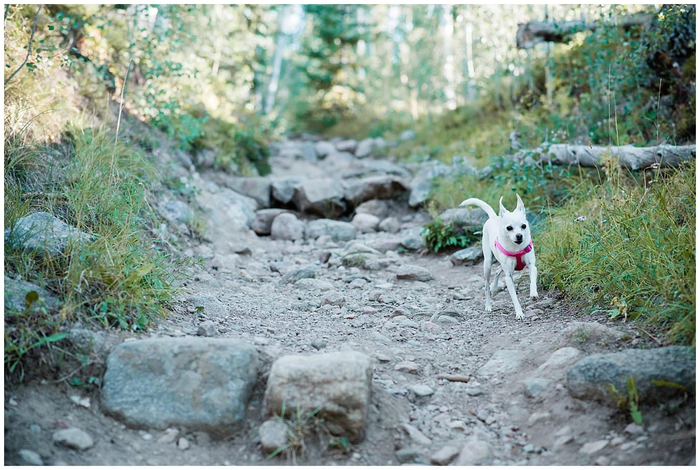 Dog on trail in Breckenridge photo