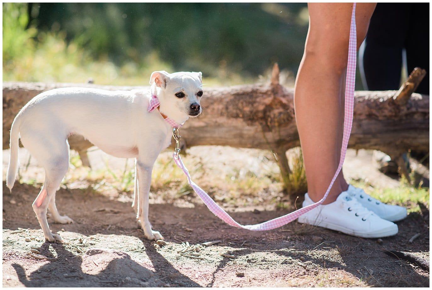 Wedding dog elopement photo
