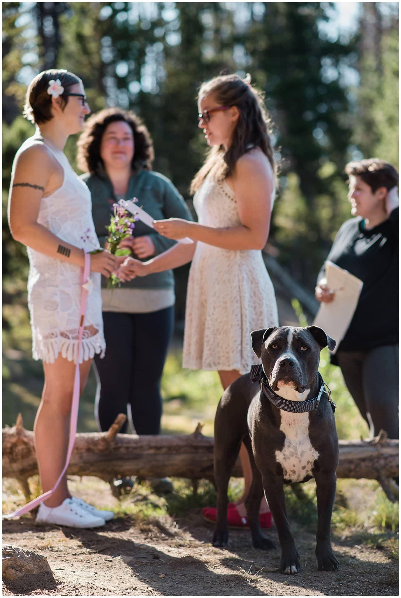 dog at hiking elopement photo