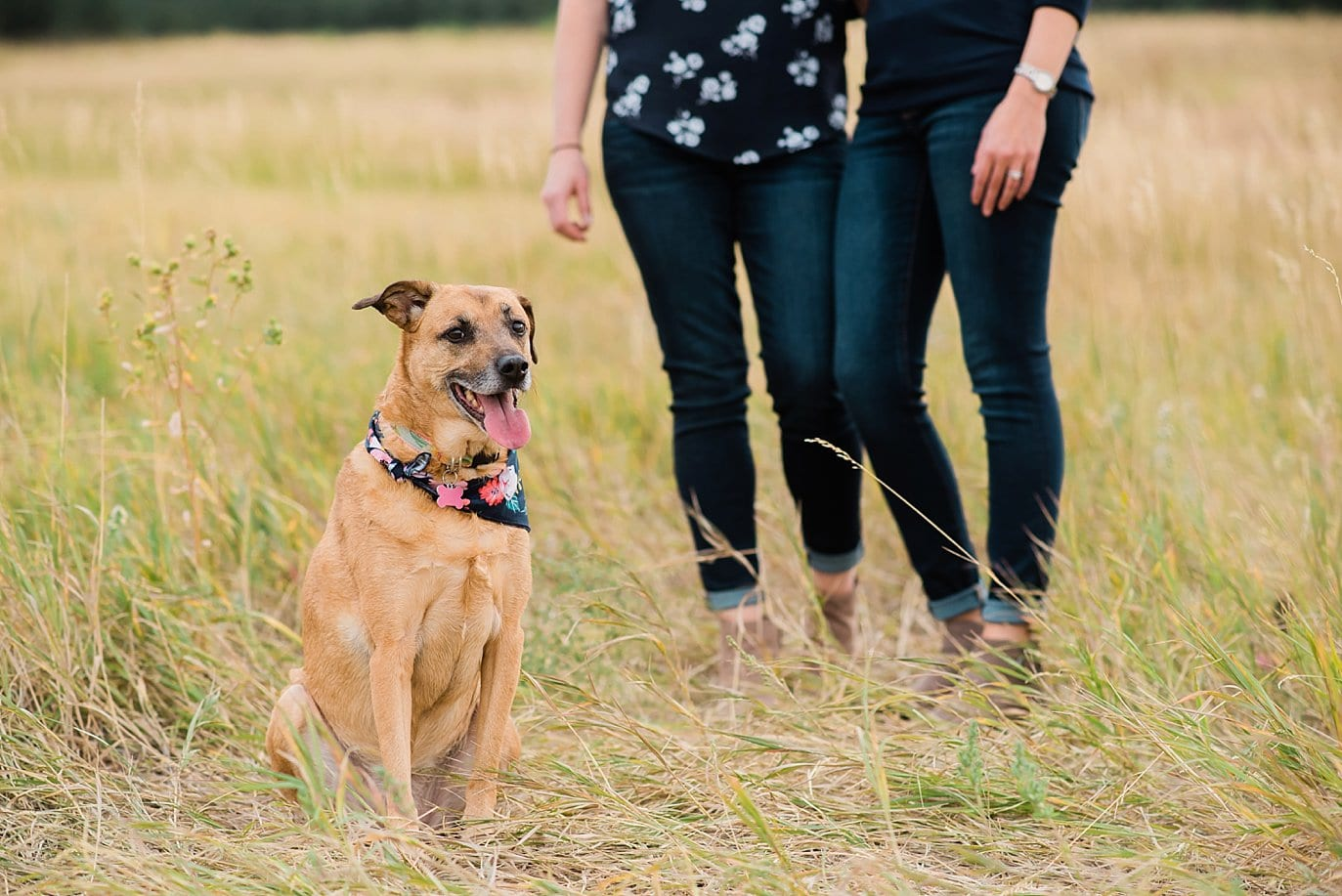lesbian couple with dog at Chautaqua Park engagement by Boulder engagement photographer Jennie Crate