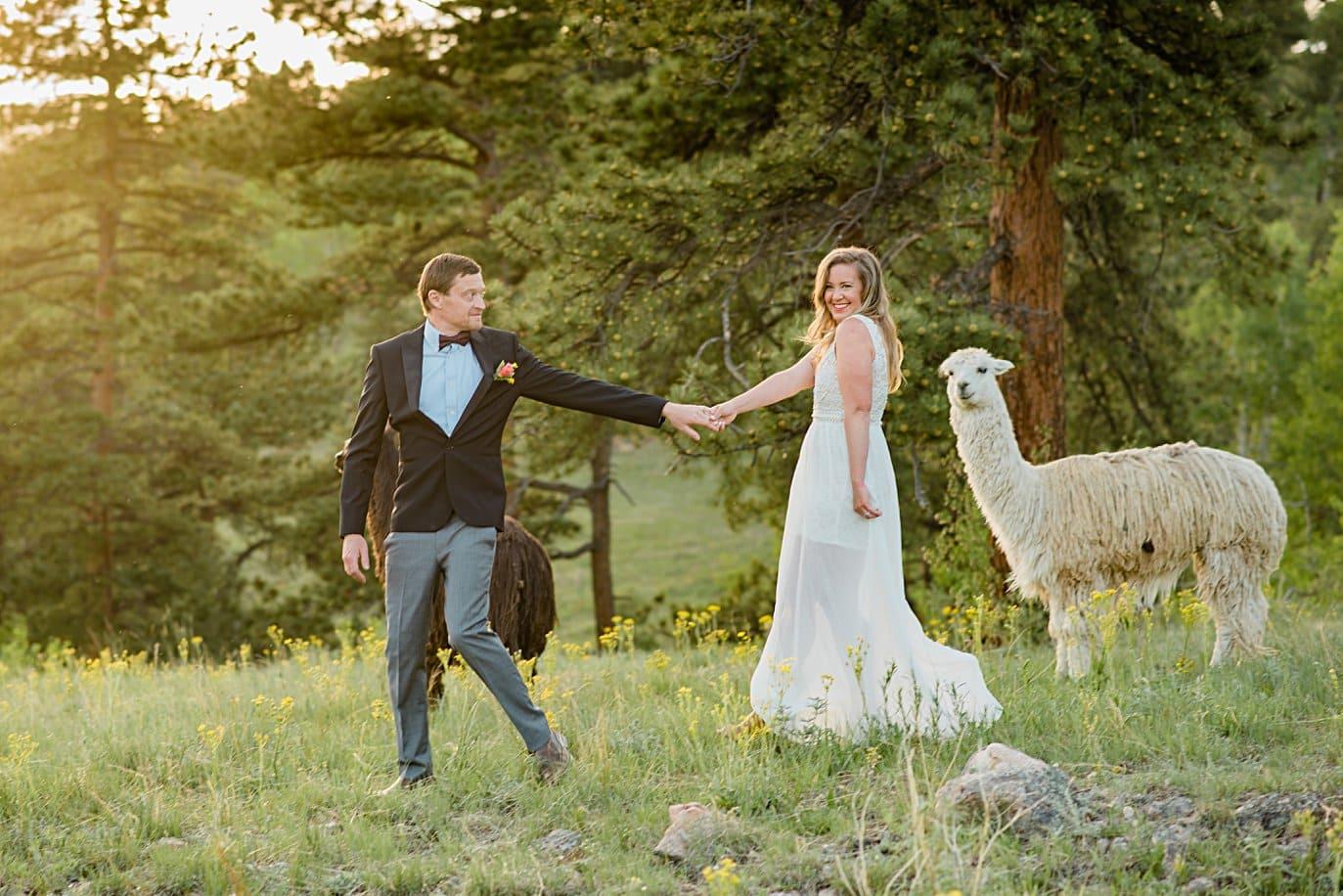 bride and groom walk through wildflower field with alpacas at Golden elopement by Golden elopement photographer Jennie Crate