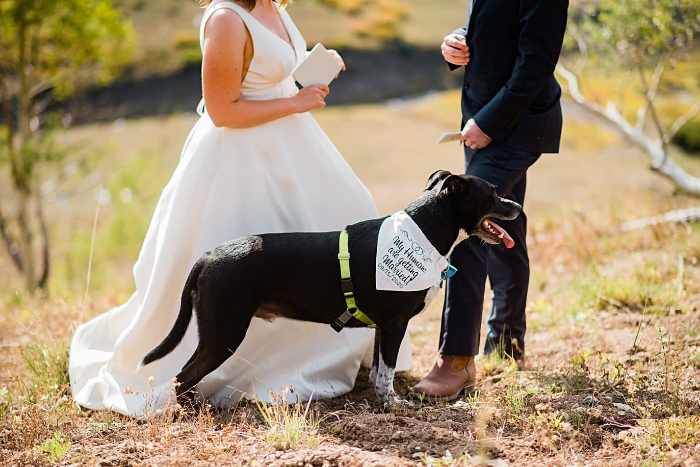 bride and groom get ready to exchange vows with dog in Crested Butte for private elopement by Aspen wedding photographer Jennie Crate