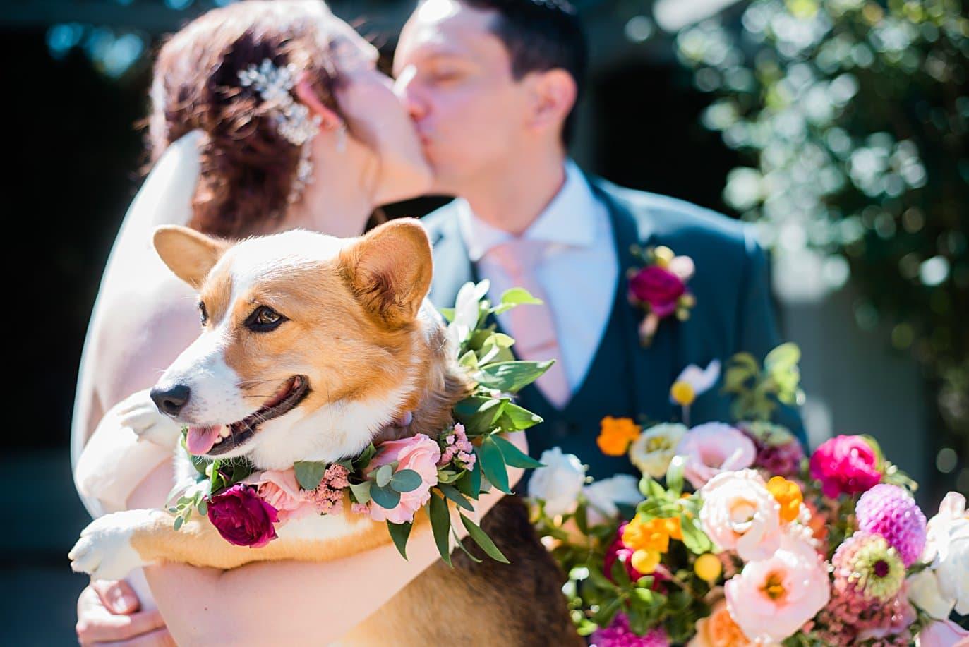 dog in flower collar on wedding day at Denver Botanic Gardens microwedding by Boulder wedding photographer Jennie Crate