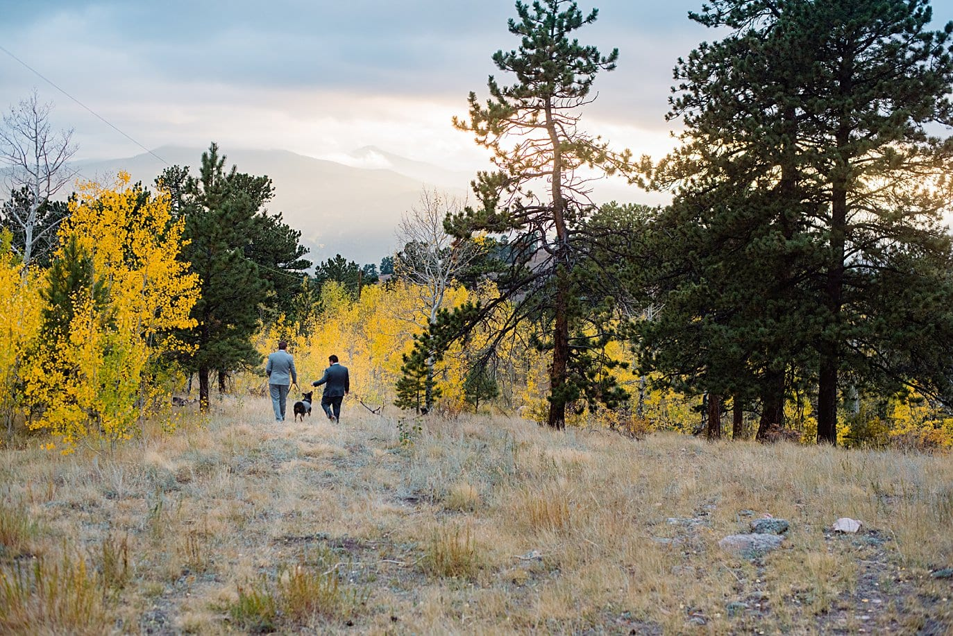 grooms walk with dogs into sunset in yellow aspens in Golden Gate Canyon by Colorado gay wedding photographer Jennie Crate