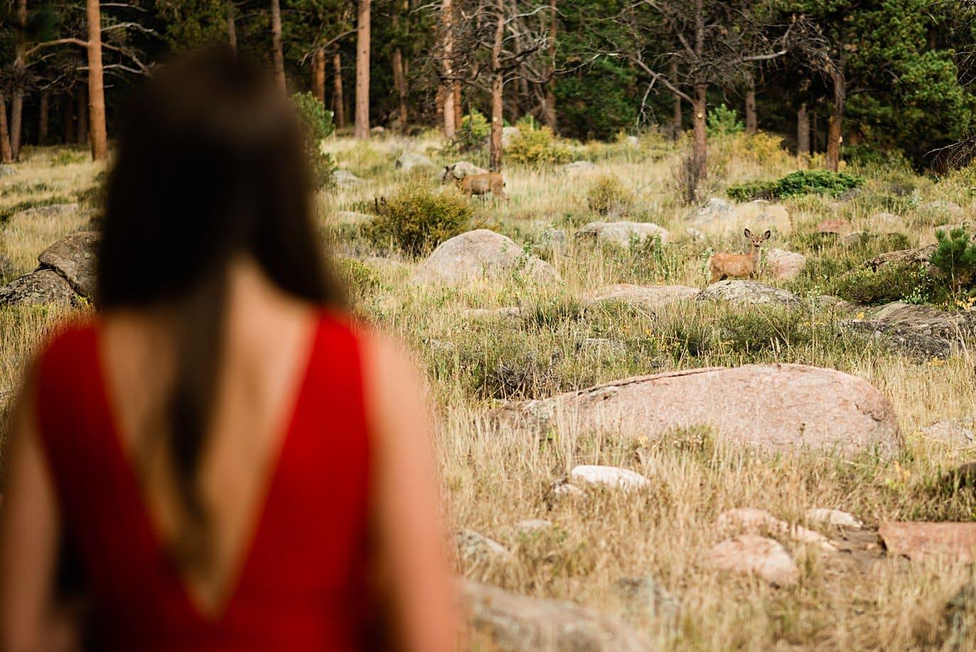 couple looks at deer at Rocky Mountain National Park engagement by Lyons engagement photographer Jennie Crate